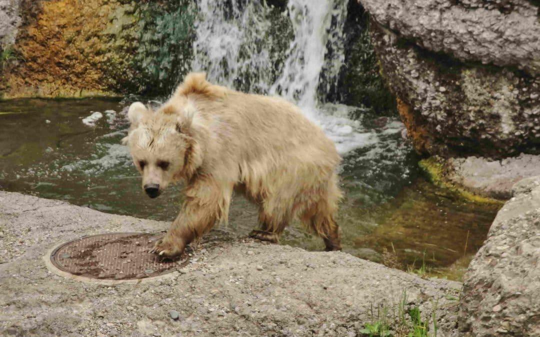 Gita al parco naturale e faunistico di Goldau in Svizzera