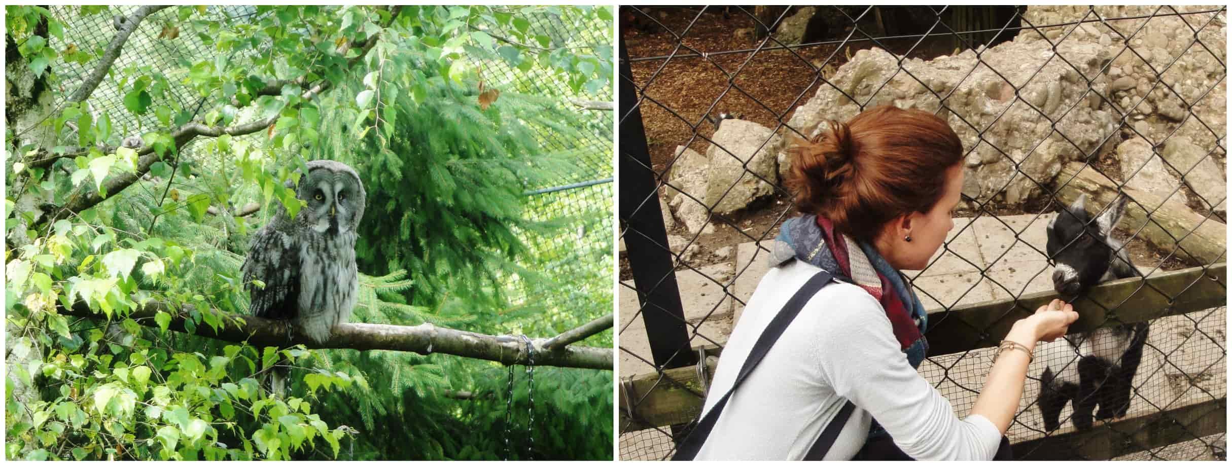 Un alloco e una capretta al parco Goldau