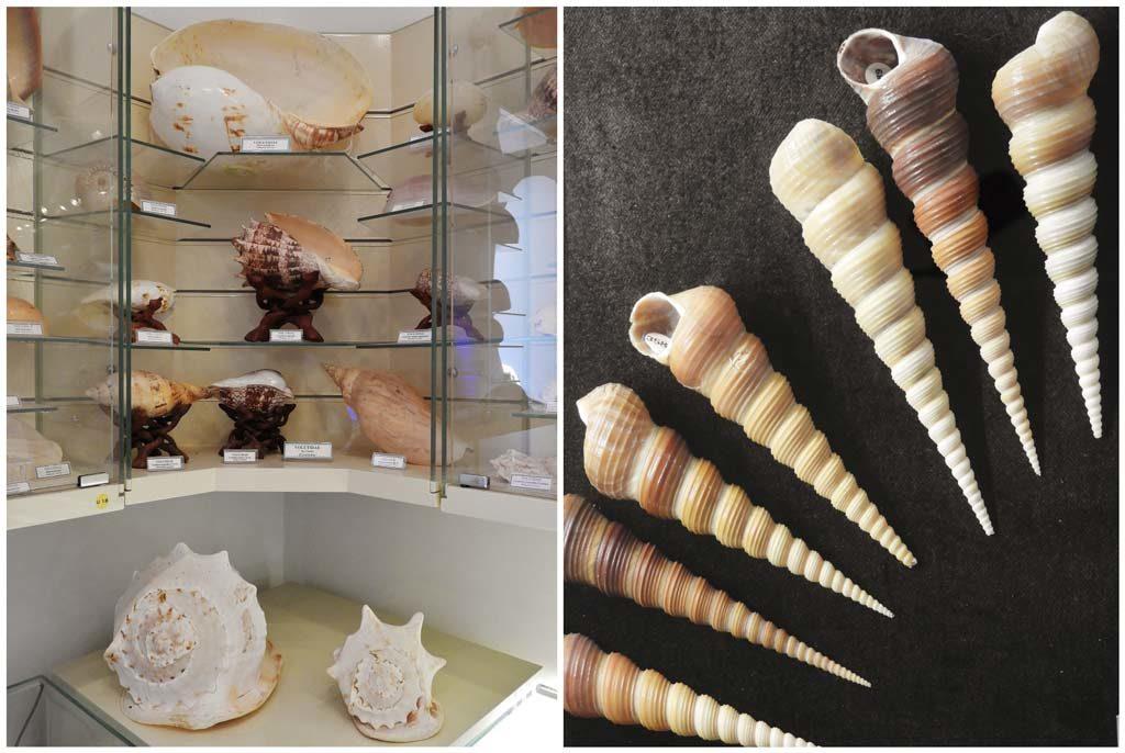Collezione di conchiglie al Museo Marittimo di Bodrum