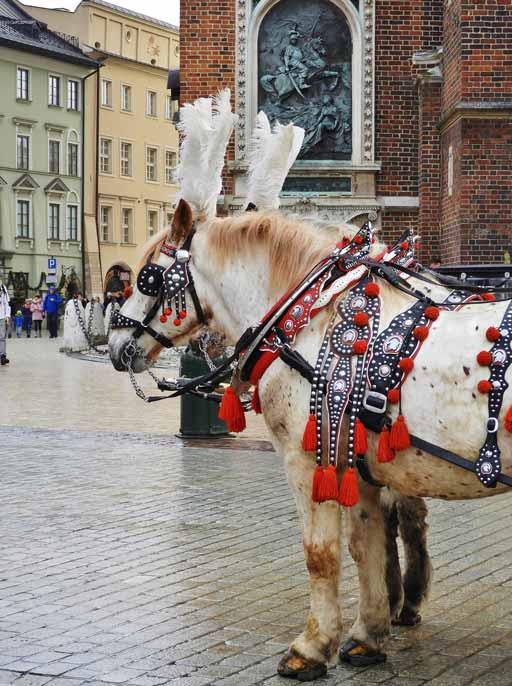 Cracovia, i cavalli in piazza Rynek Głowny