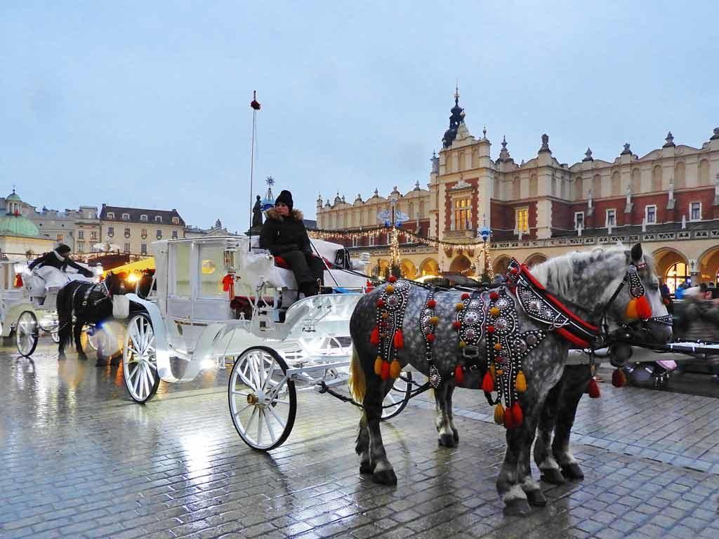 Cracovia, cavalli in piazza Rynek Głowny