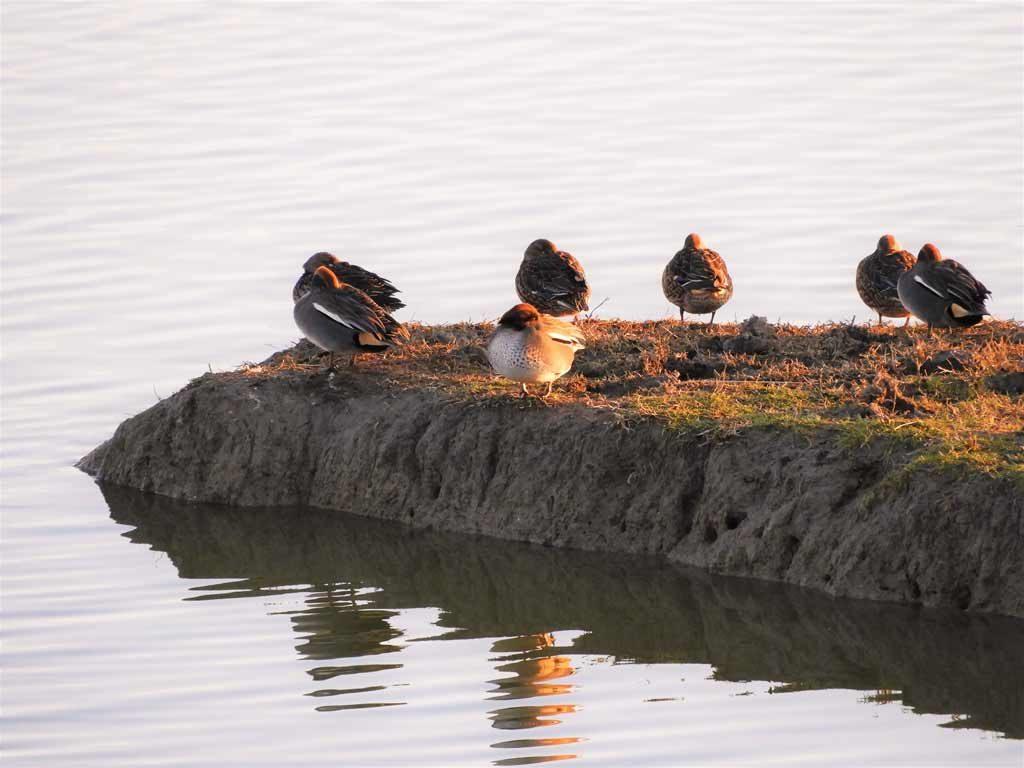 L'avifauna alla Riserva Naturale Foce dell'Isonzo