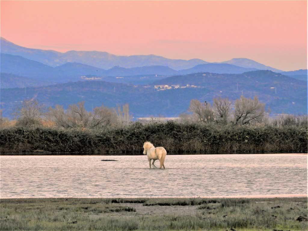 L'Isola della Cona e i cavalli al tramonto