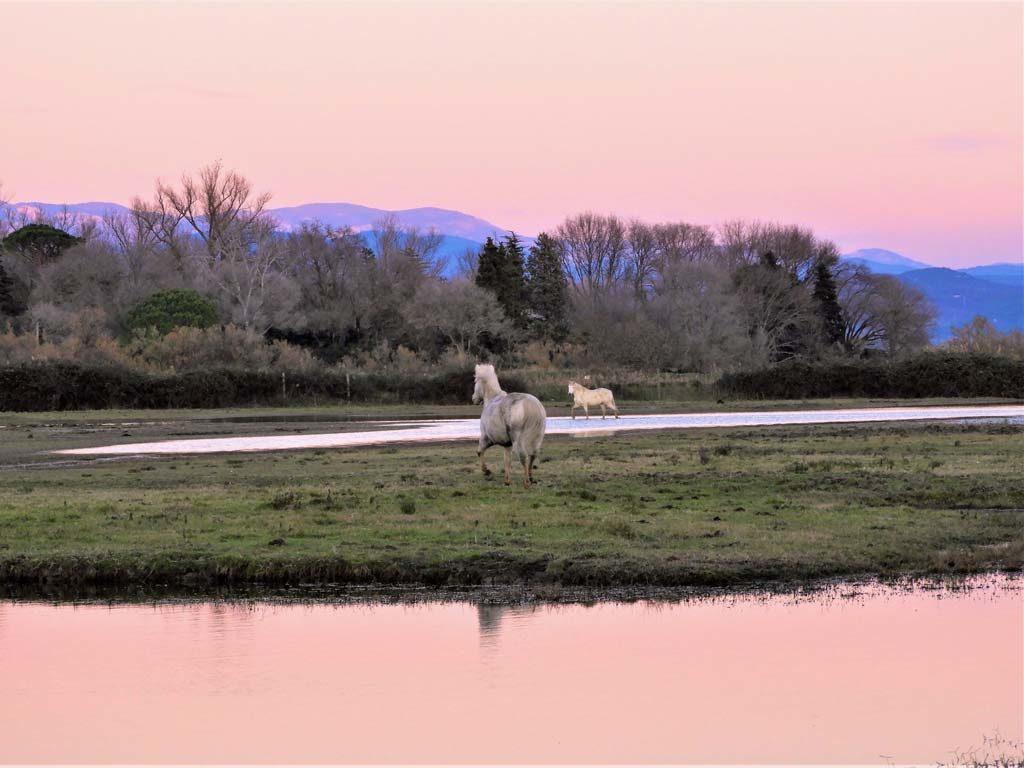 L'Isola della Cona e i cavalli Camargue al tramonto