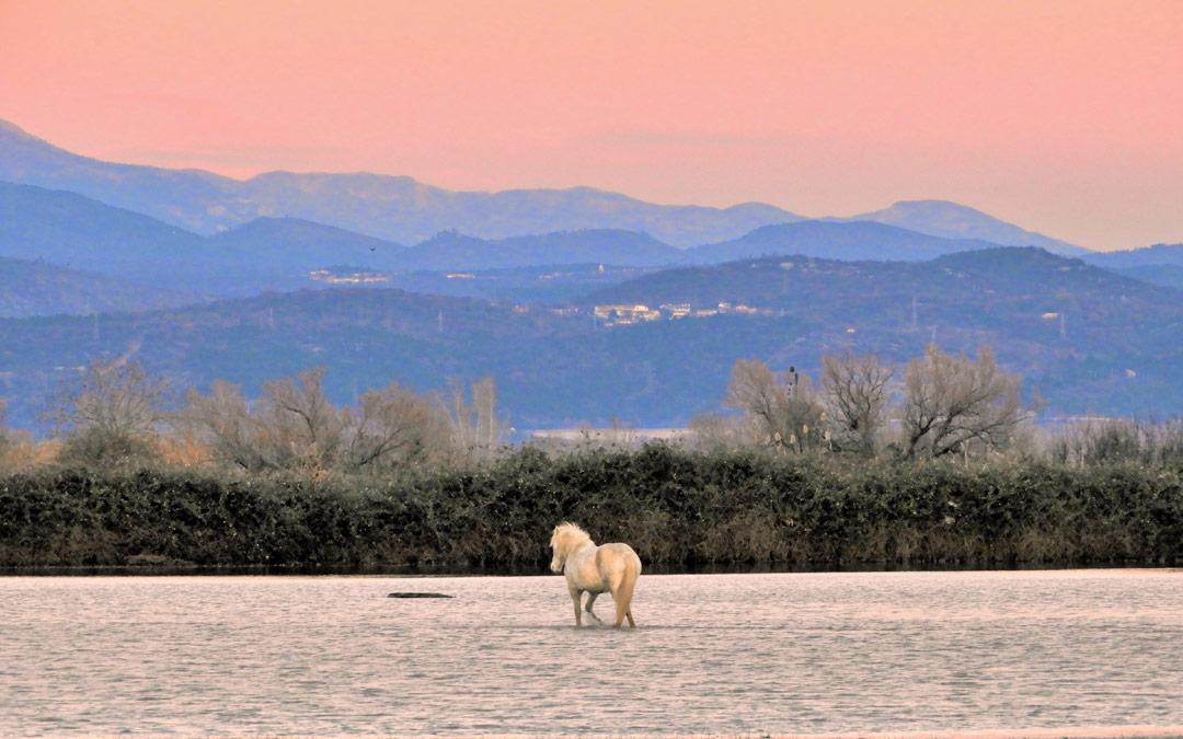 Isola della Cona: riserva naturale per i cavalli Camargue (e non solo)